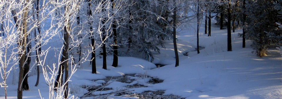 creek winding between snowy trees through a forest