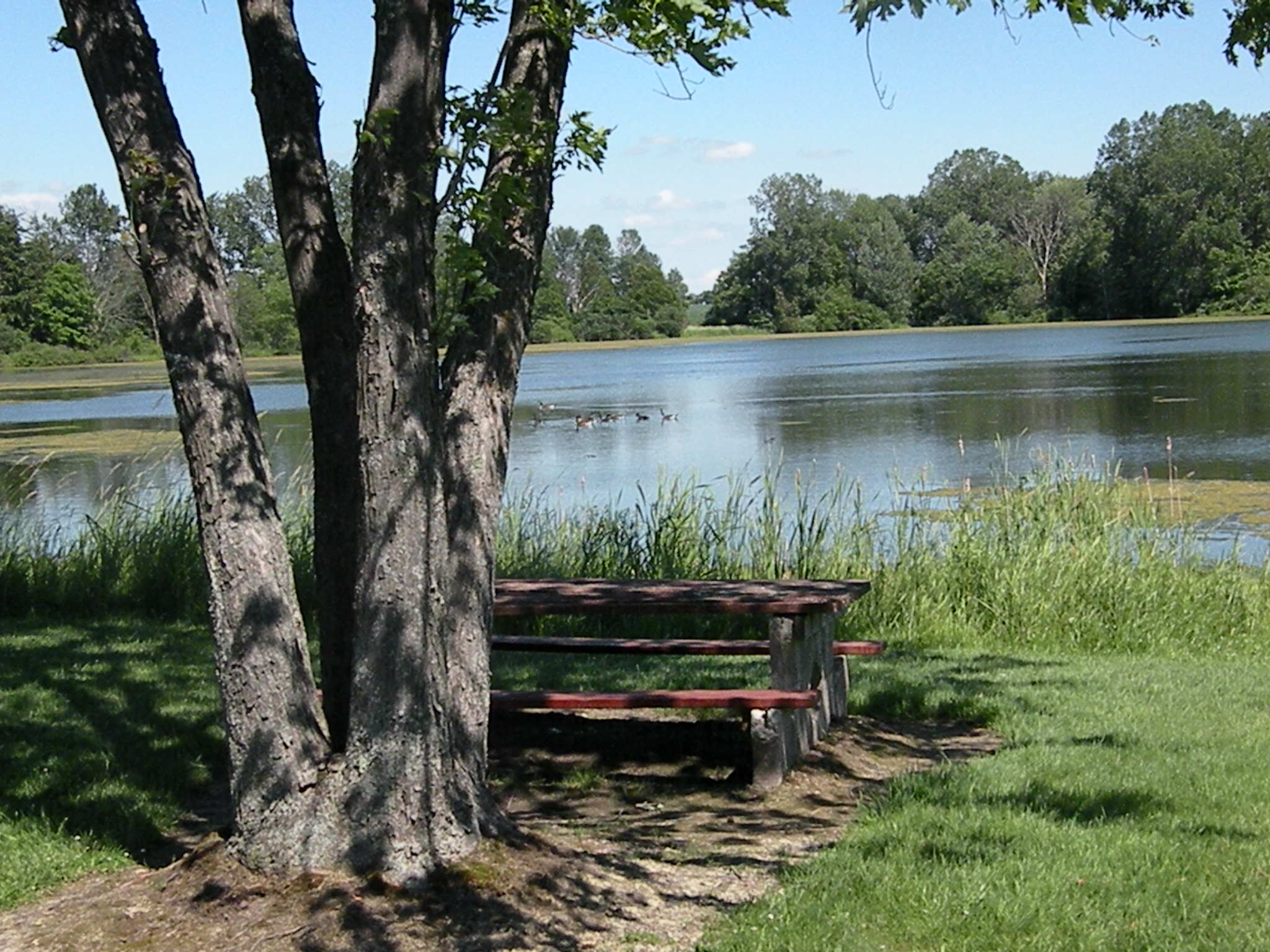 picnic table overlooking pond